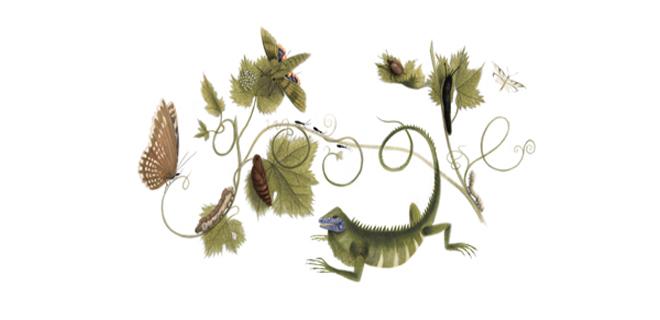 Google-doodle-Sibylla-Merian