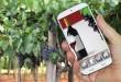 Vino e Digitale 2015: migliorano i social, male l'e-commerce [Ricerca]